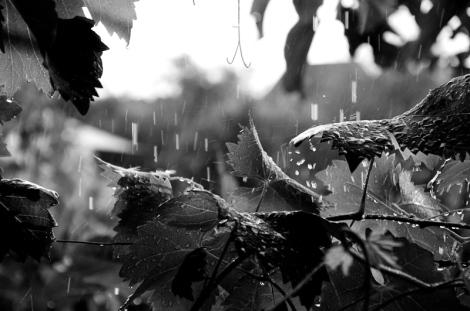 lluvia_verano